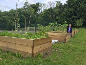 Allotment Boxes